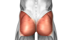 gluteal amnesia personal trainer in West Hartford CT