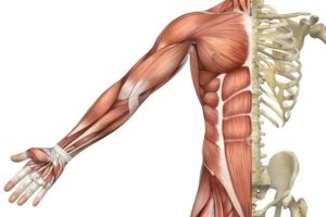 muscle fiber types personal trainer ct